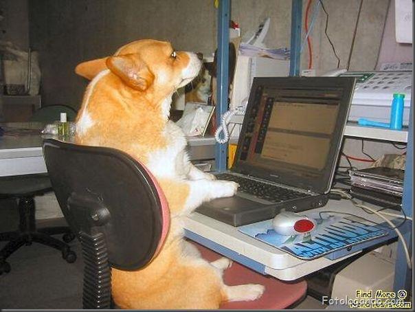 Animais no computador (8)