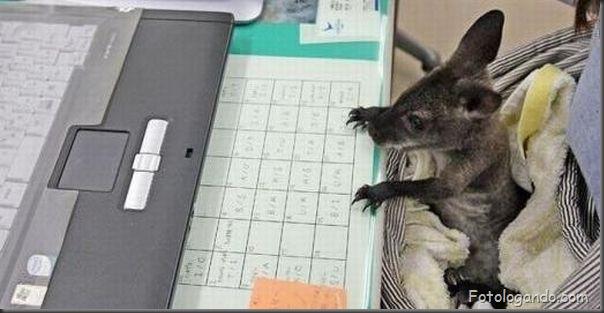Animais no computador (2)