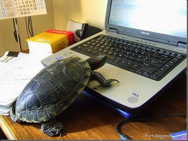 Animais no computador (5)