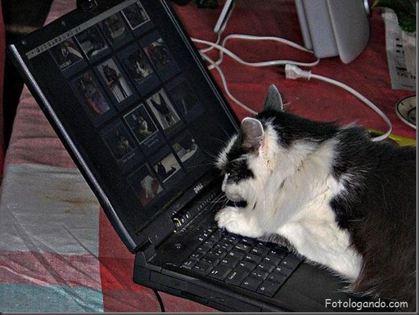 Animais no computador (4)