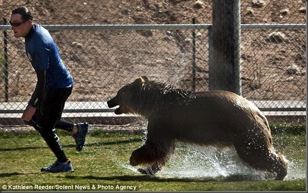 Urso brincando com treinador no zoológico (1)