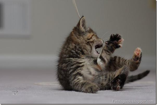 momento oinn especial gatos (13)