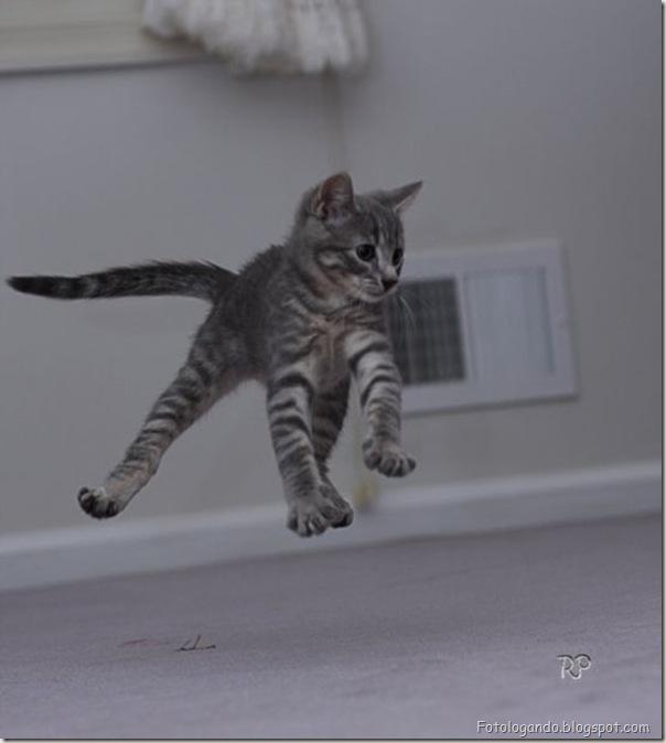 momento oinn especial gatos (18)
