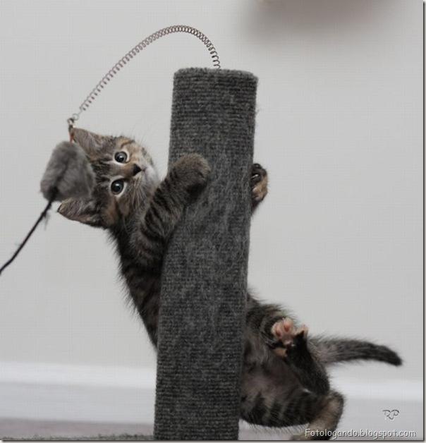 momento oinn especial gatos (17)