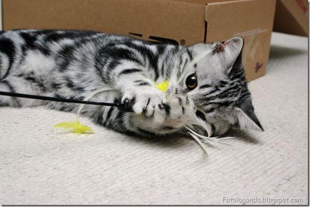 momento oinn especial gatos (24)