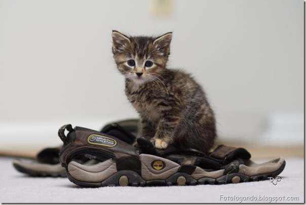 momento oinn especial gatos (7)