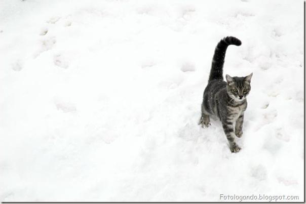 momento oinn especial gatos (59)