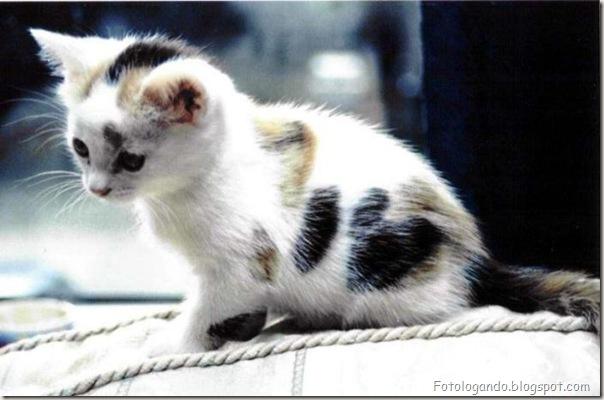 momento oinn especial gatos (68)