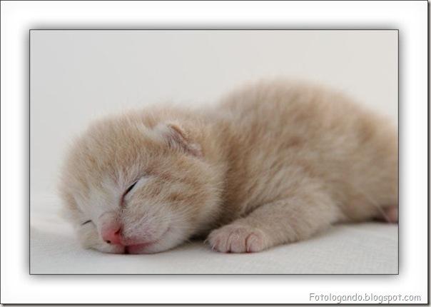 momento oinn especial gatos (34)