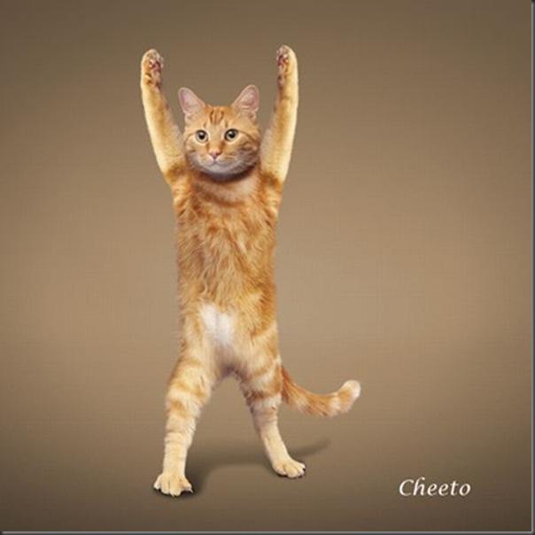A yoga dos gatos (2)