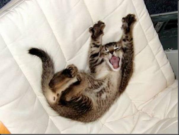 Fotos de gatinhos fofos bocejando (9)