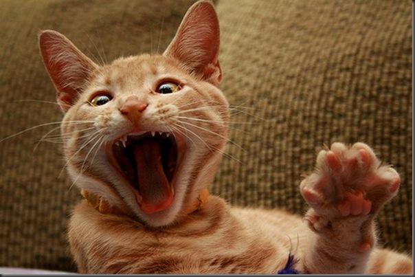 Fotos de gatinhos fofos bocejando (6)