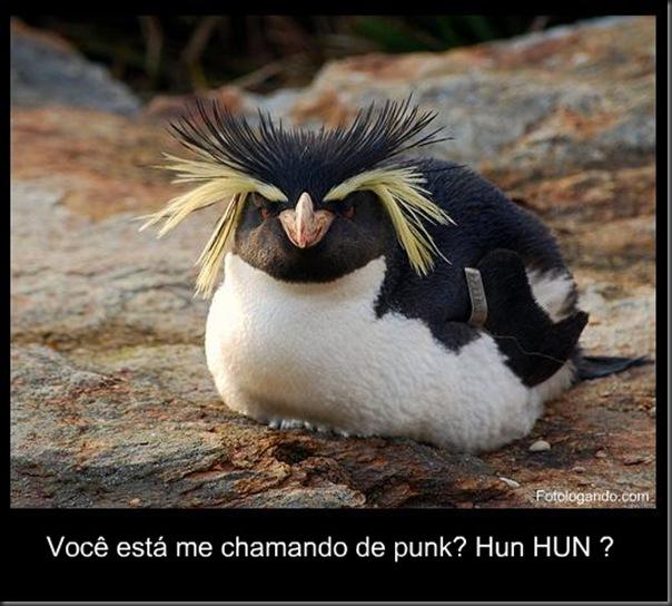 pinguim punk engraçado