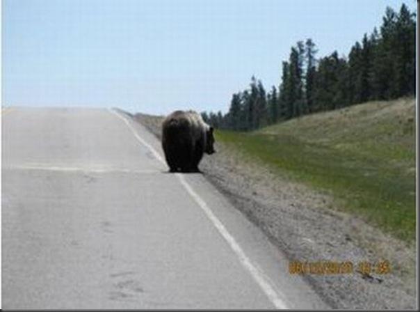 Jantar romantico entre ursos
