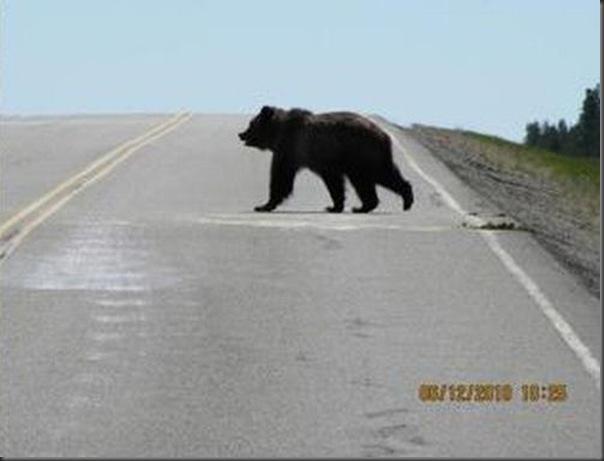 Jantar romantico entre ursos (2)