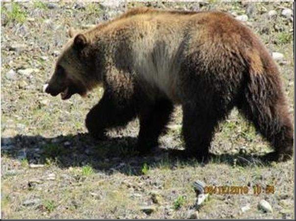 Jantar romantico entre ursos (28)