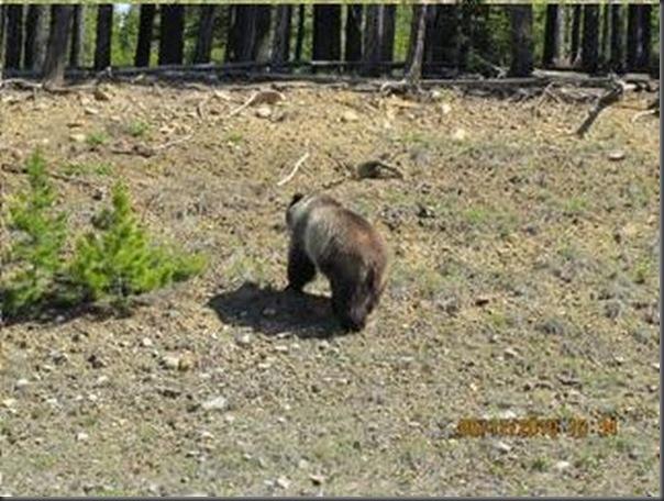 Jantar romantico entre ursos (30)