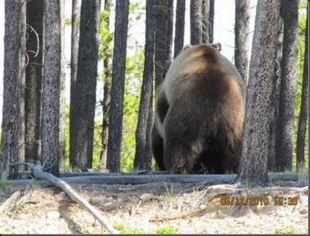 Jantar romantico entre ursos (34)