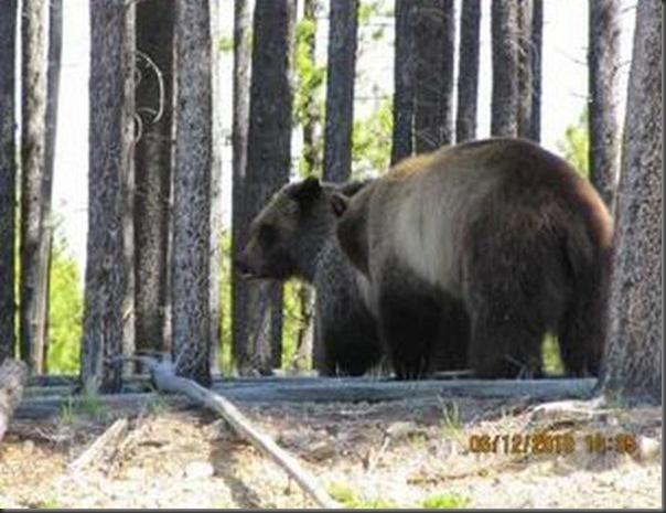 Jantar romantico entre ursos (37)