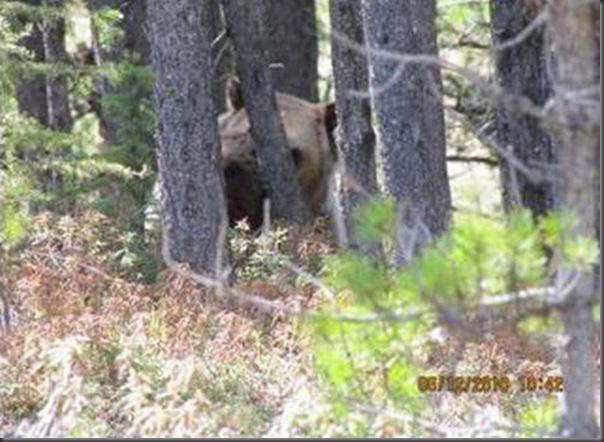 Jantar romantico entre ursos (39)