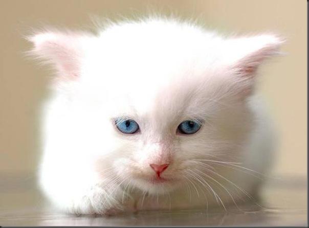 Um gatinho que parece um brinquedo (6)