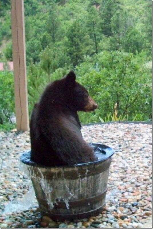 Por que o barril de água sempre está vazio (2)