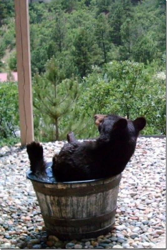 Por que o barril de água sempre está vazio (3)