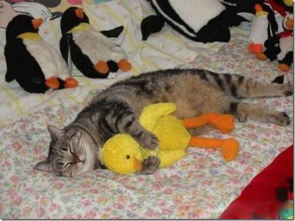Animais fofos dormindo (18)
