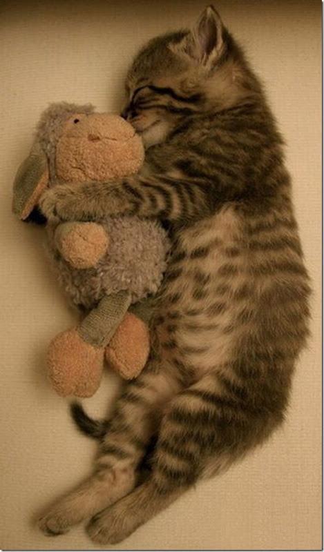 Animais fofos dormindo (16)