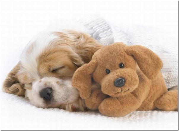 Animais fofos dormindo (1)