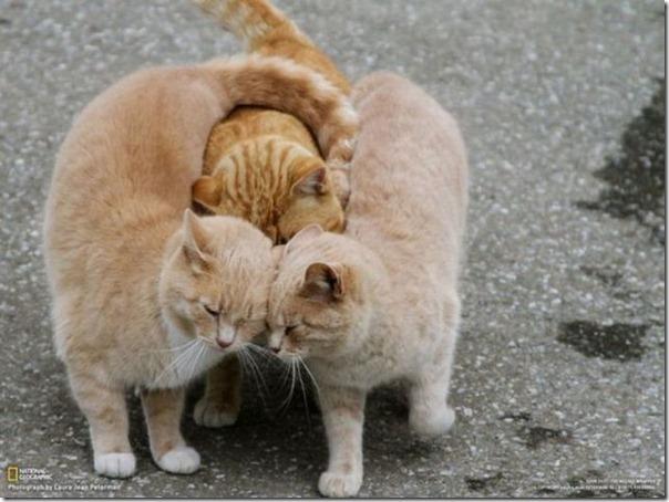 Abraço Coletivo