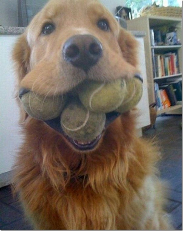 Vamos brincar de bola
