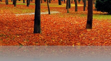 hojas en el suelo