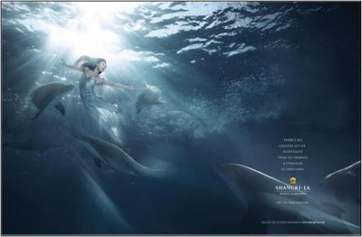 Kind dolphin