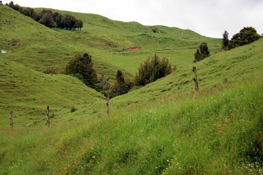 Łąki w NZ