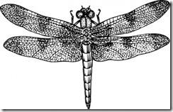 dragonfly_clip_art_19561
