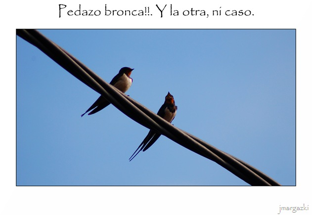 pedazo_bronca