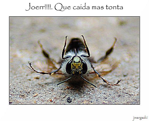 que_caida_mas_tonta