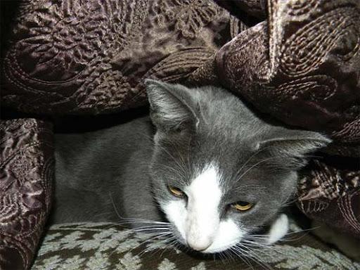 Gato sumido durante furacão Katrina é reencontrado