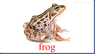 frog flash