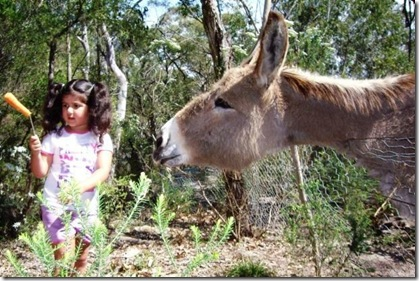 El burro y la zanahoria salud dinero amor riqueza felicidad