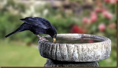 birdbath_large