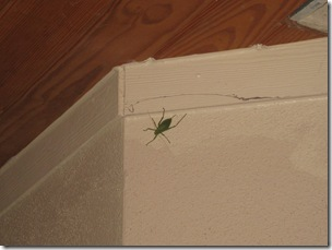 big green bug