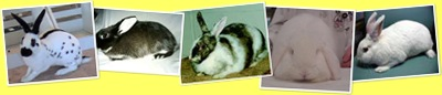 View Type of rabbits