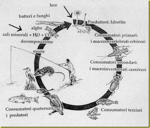 catena alimentare