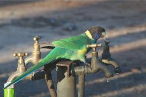 parrot1.PEU2q9DfQuyj.jpg