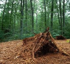 Debris Hut-Sheva Apelbaum