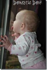 baby window lick