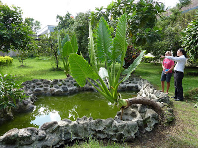 The pond in which Lizzy & Suzanne used to play with the frogs - to the amusement of the students in the dorms around