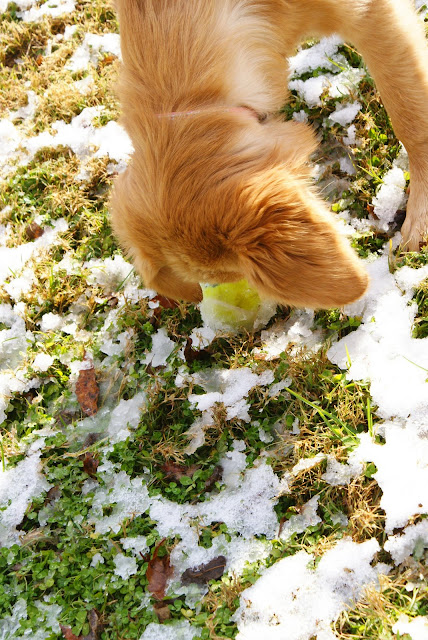 Victoria inspects her snow covered ball